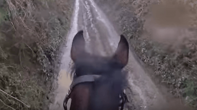 This is why you don't take a retired racehorse out for a leisurely stroll.