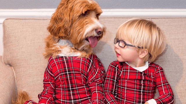 Look at this toddler and Labradoodle who love dressing in matching outfits. You deserve it.