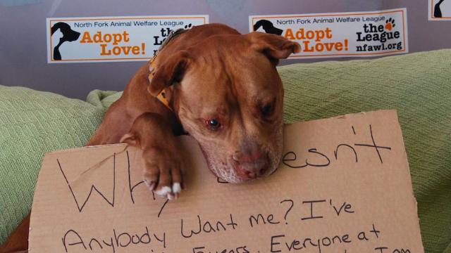 dog adoption story