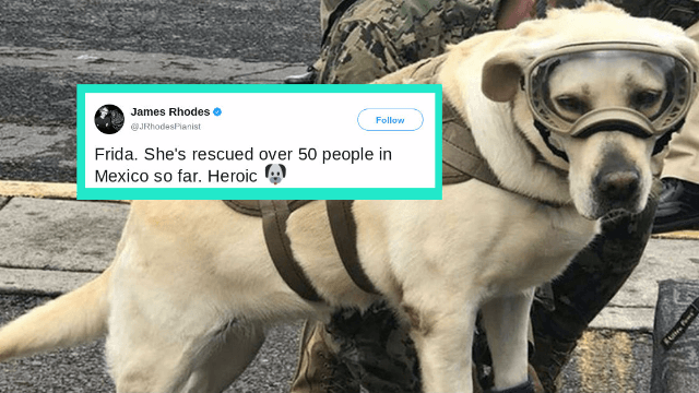 A rescue dog who's saved dozens of lives in Mexico is Twitter's most adorable hero.