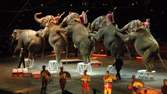 Can you guess the joke that all of Twitter is making about the Ringling Bros. circus finally shutting down?