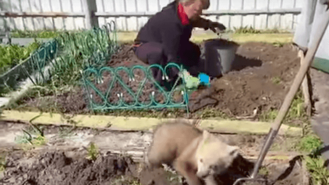 This Russian woman gets help gardening from a tiny bear cub, so not everything is terrible.