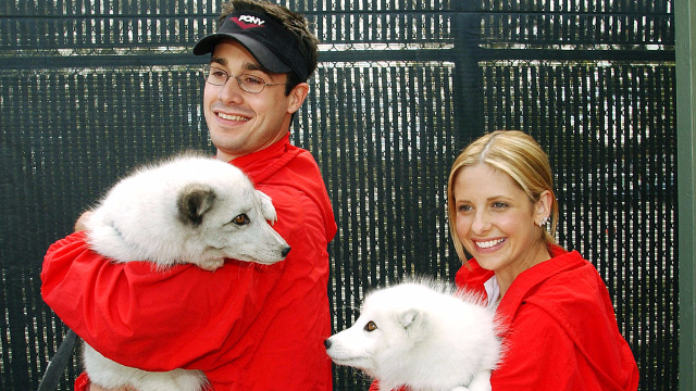 Sarah Michelle Gellar and Freddie Prinze Jr. posted an anniversary video. The internet has the feels.