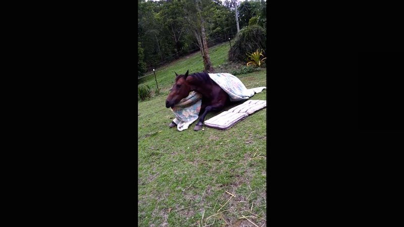 Let this horse tucking itself into bed be the official signal that Monday is over.