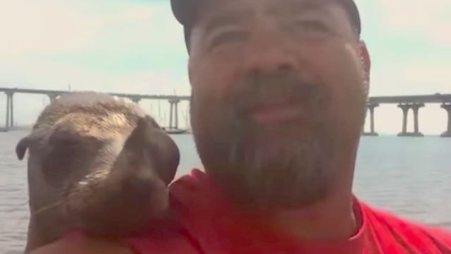 Sea lion hops up on man's boat and decides they're best friends forever.