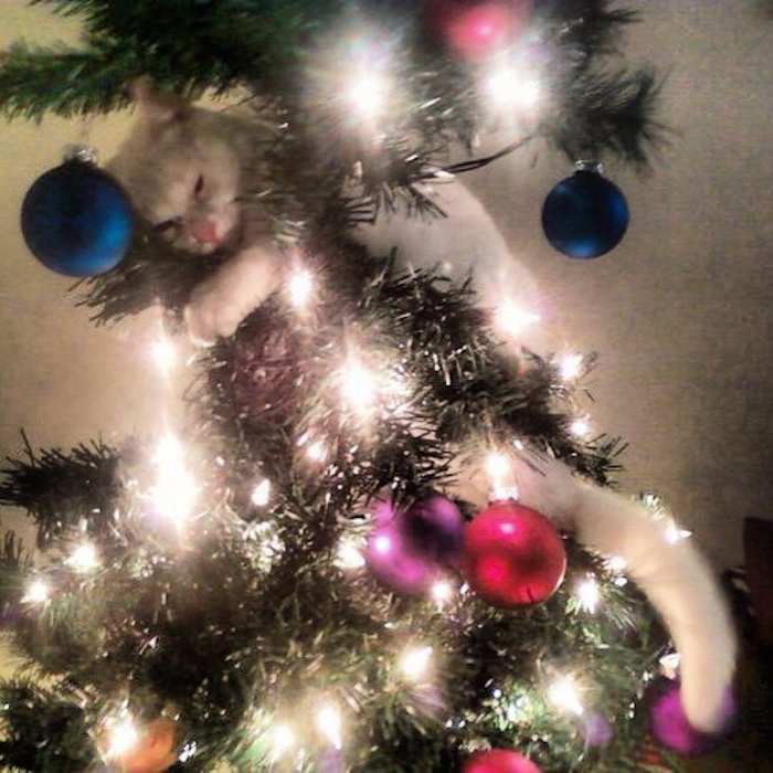 17 Cats That Should Be Nowhere Near A Christmas Tree. | Someecards ...