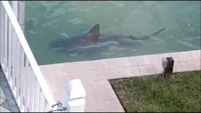 These Florida homeowners are having problems with people luring sharks to their backyard.