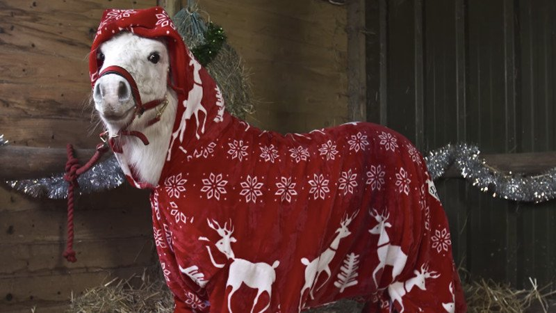 Someone put a Shetland Pony in a onesie, and of course it's the cutest thing you'll see today.
