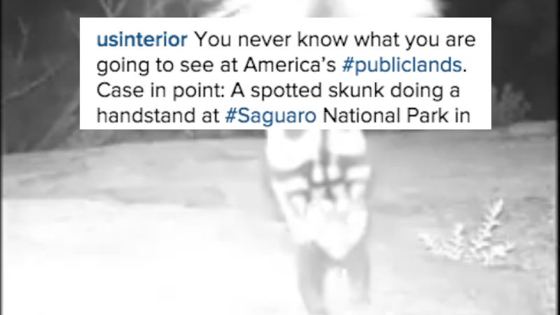 Watch a crazy-looking skunk do a handstand because the government wants you to.