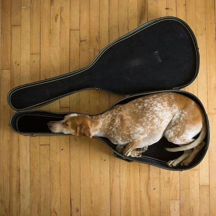 15 photos that prove dogs can fall asleep anywhere.