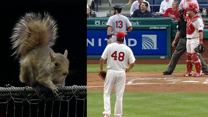 Squirrel at Phillies game proves that America's pastime isn't baseball, it's watching animals.