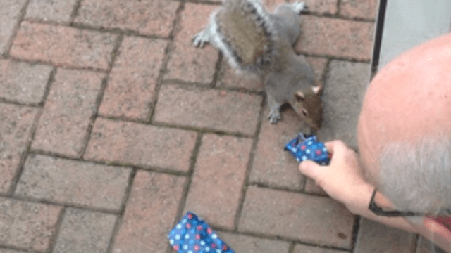 This  man who wrapped Christmas presents for squirrels is the reason for the season.
