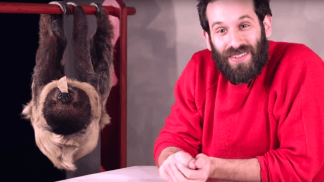 Someone got people stoned and then surprised them with a sloth. They weren't ready.