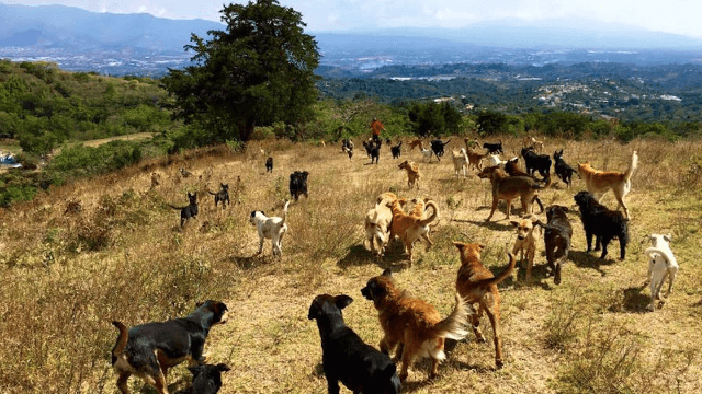 There's a park full of 900 dogs in Costa Rica, and it's just as magical as you'd think.
