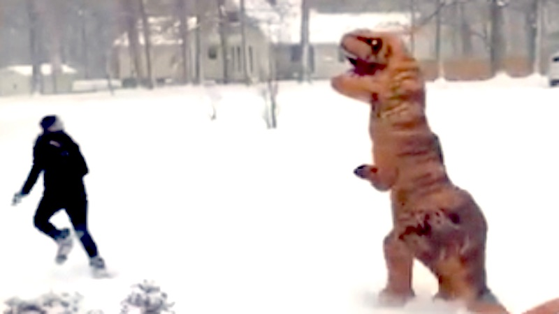 T-Rex has mastered shoveling snow and evolved to snowball fights.