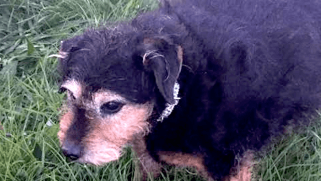 12-year-old dog found abandoned in a field next to a heartbreakingly cold note.