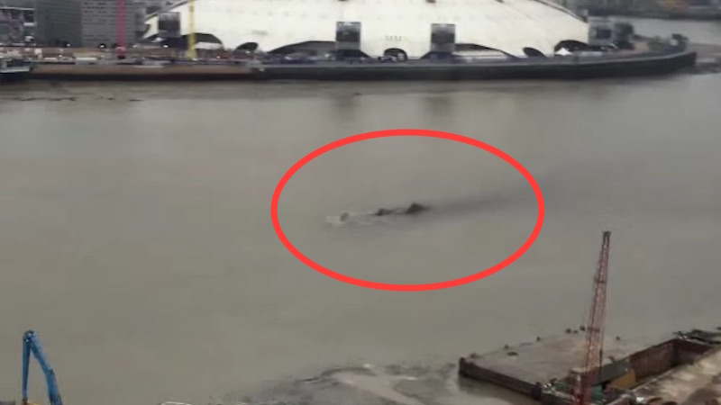 What is this thing lurking in the Thames River? A school of dolphins or a load of marketing?