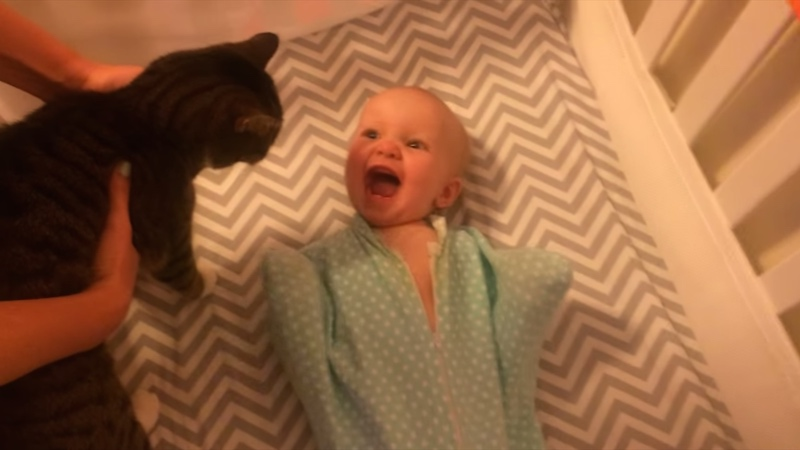The Internet makes more sense after seeing this baby lose its soft head when meeting a cat.