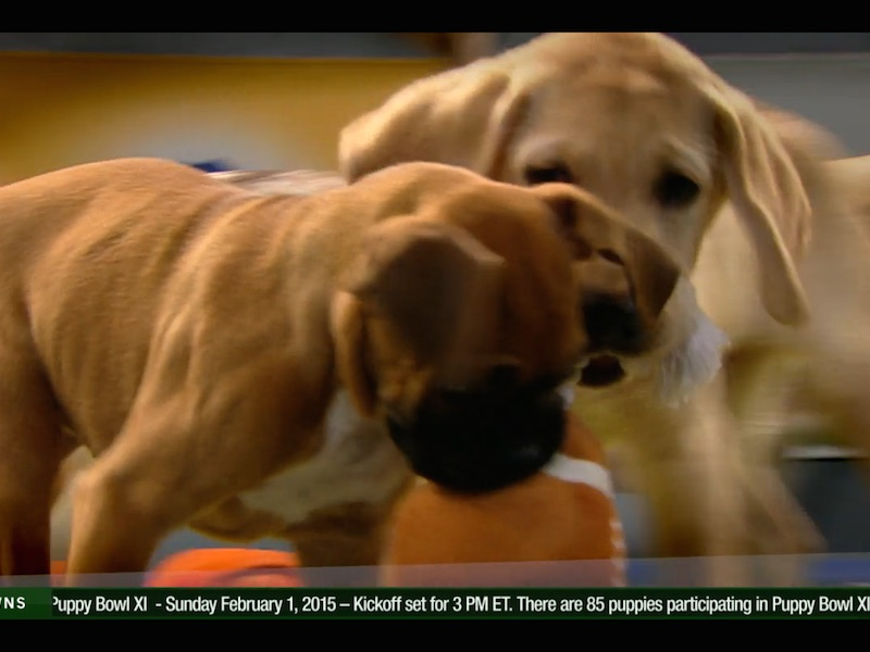 The pregame show for Puppy Bowl XI is here, and none of them are suspected of cheating.