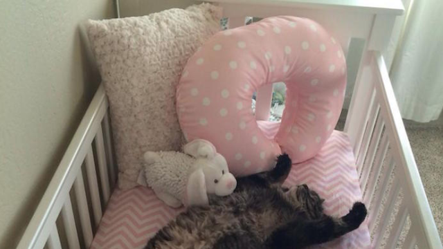 These thoughtful humans put together a nursery and crib just for their cat.