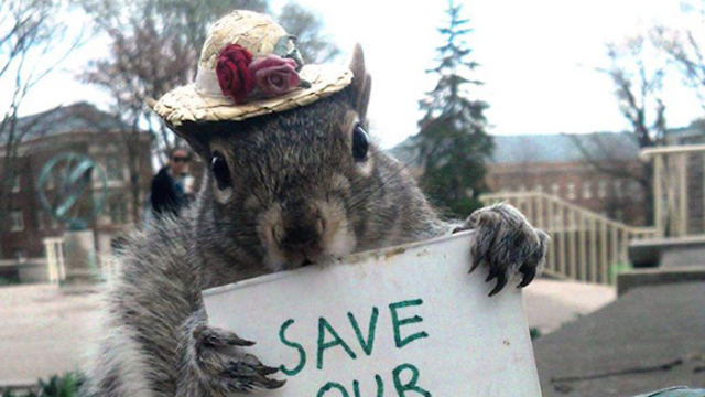 This college student dresses up squirrels in costumes. We hope she washes her hands after.