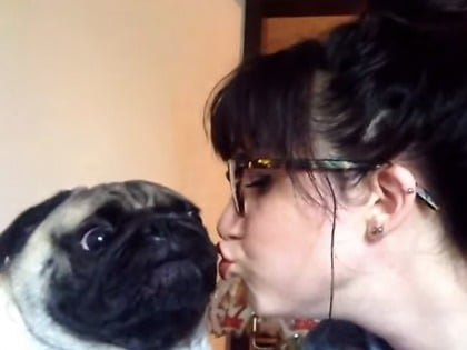 This cute pug does not want your stupid kisses.