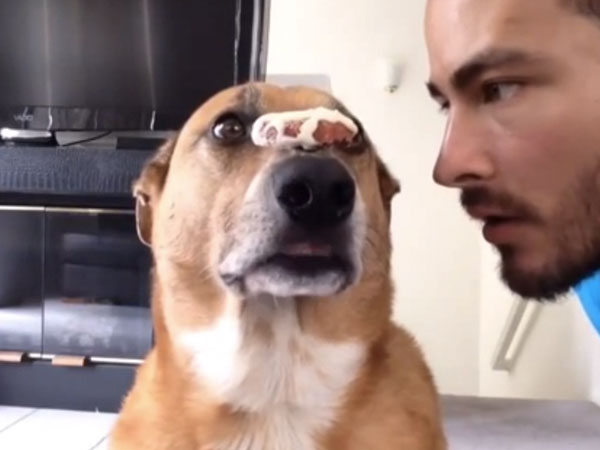 This dog balancing meat on his snout has way more discipline than you.