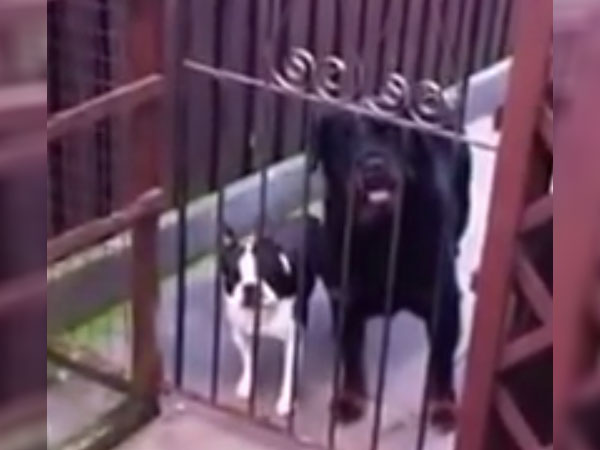 """This dog will say """"hello"""" right back to you."""