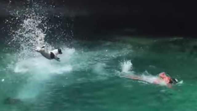 This doggy acrobat gets a 10/10 for a perfect cliff dive in Malta.