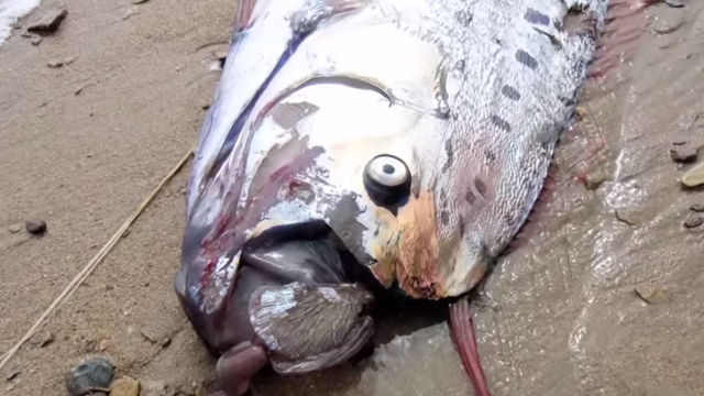 This giant 18-foot monster fish found in California will haunt your dreams.