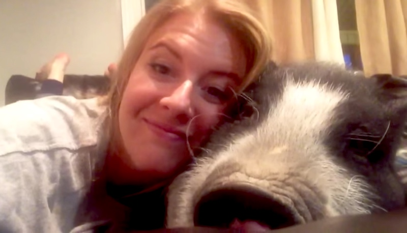 This grumpy pig has the cutest way of saying she doesn't feel like cuddling.