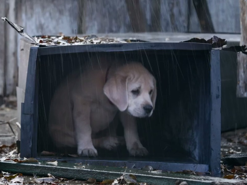 This is the Budweiser puppy ad all your friends are pretending not to sob over today.