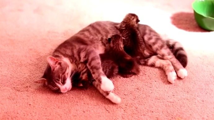 Grieving mama cat and orphaned kittens come together to warm your heart.