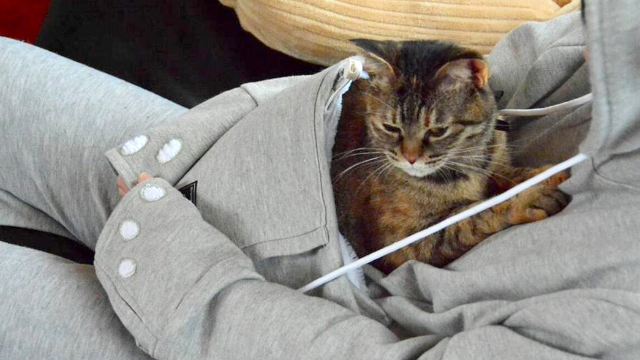 What do you get the cat mommy that has everything?