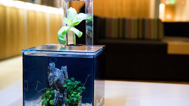 This self-cleaning aquarium was a huge hit on Kickstarter for a reason.