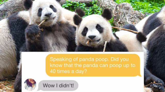 Guy tries to woo Tinder match with panda facts, digs himself a 100-day hole he can not escape.
