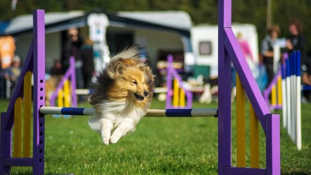 15 funny reactions to viral video of 'Gabby' the dog flying through obstacle course.