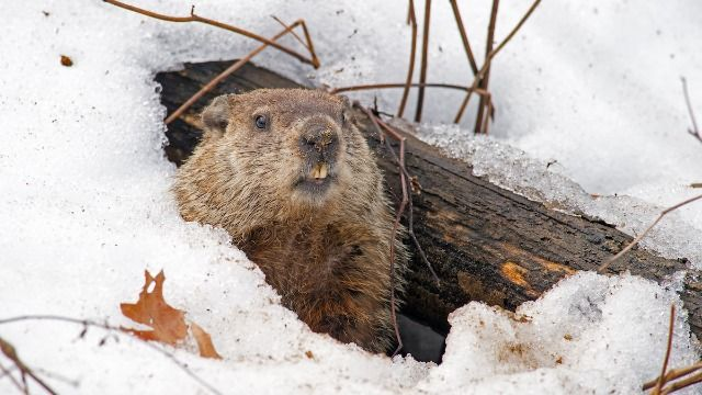 22 of the funniest tweets about Groundhog Day.