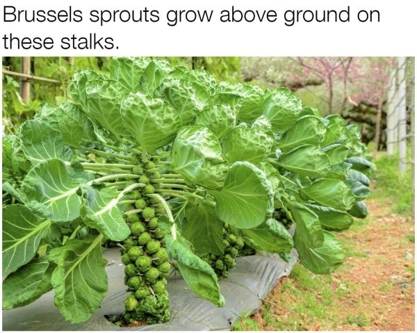 17 Photos That Prove You Have No Idea How Food Grows