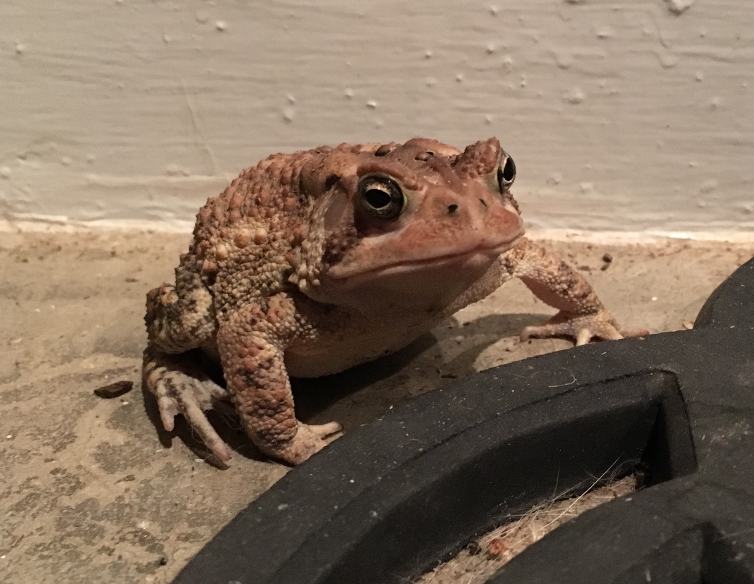 Newsome named his friendly visitor Mr. Toad.