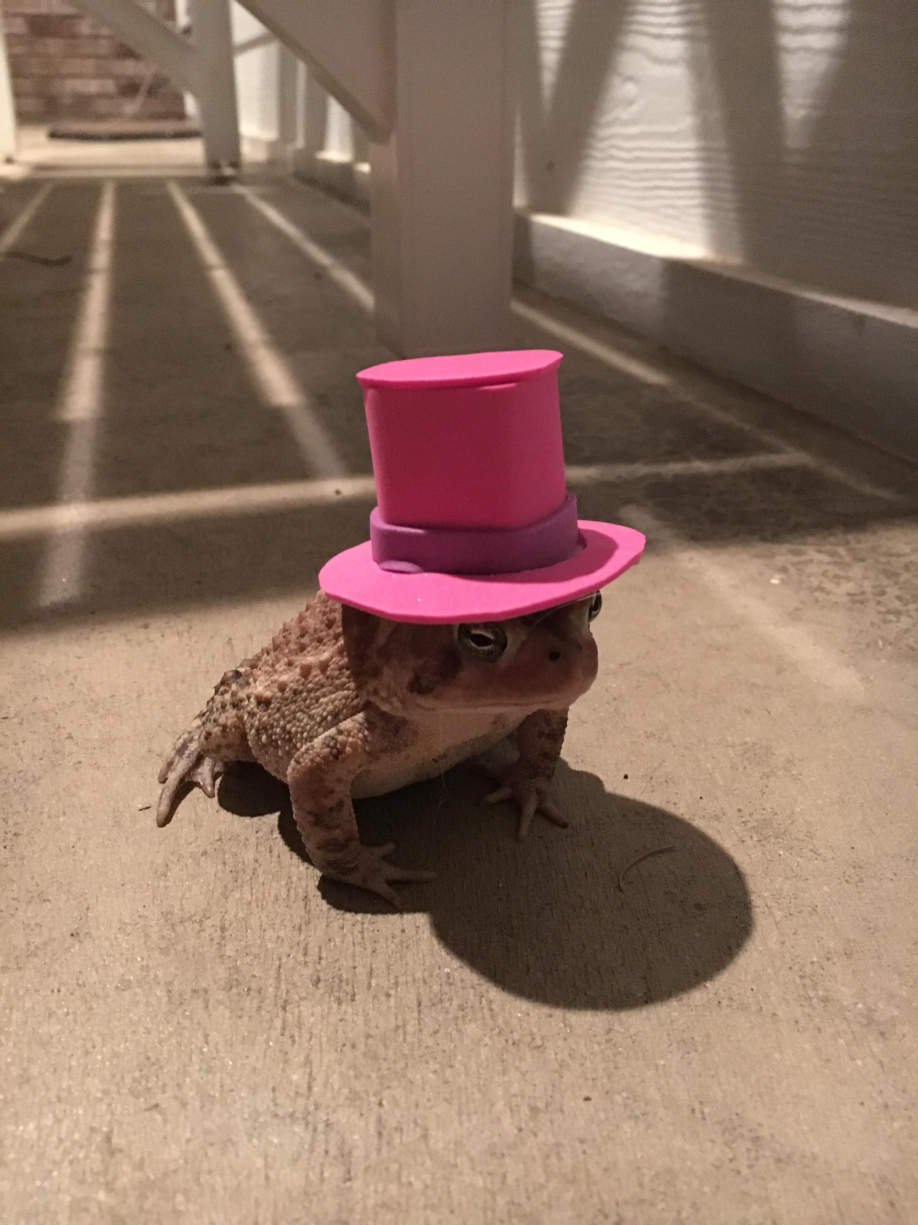 Ta-da! A dapper Mr. Toad.