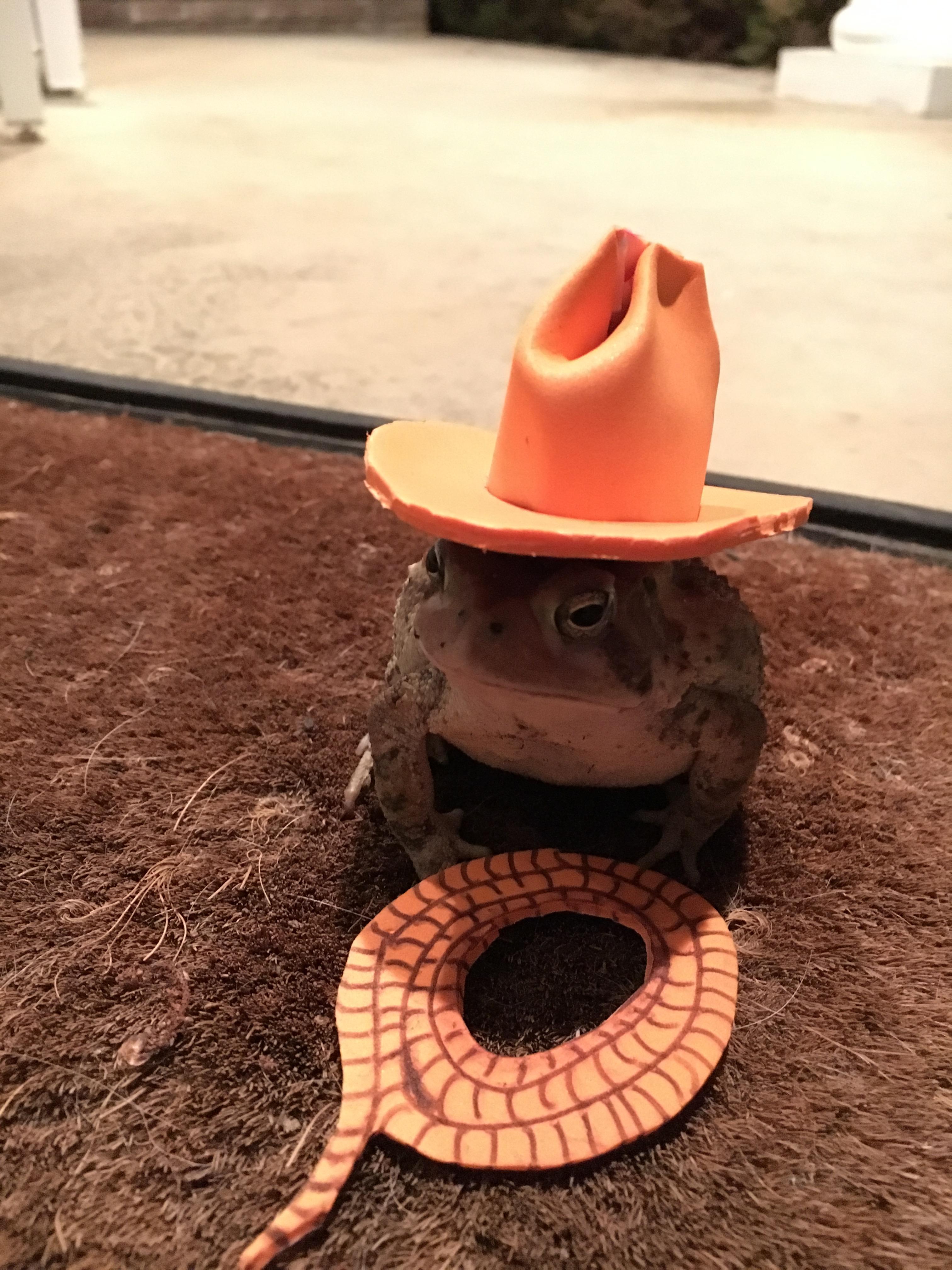 A cute lil cowboy toad.