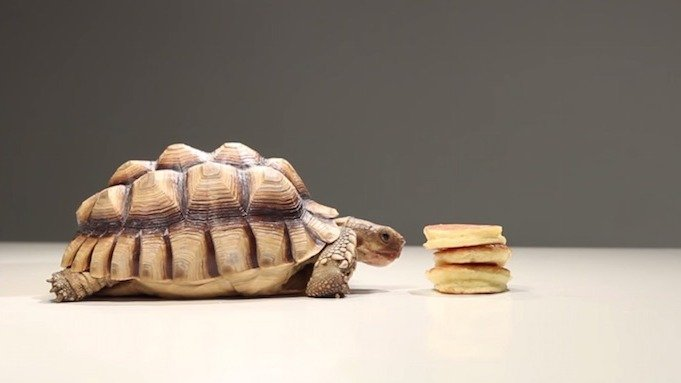 You are going to want to watch this video of tortoises eating tiny pancakes.