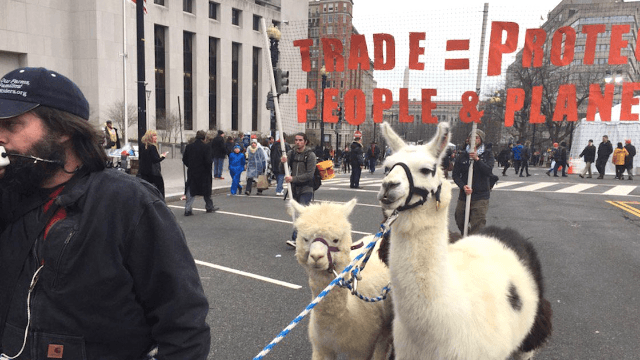 22 tweets that show protestors, both human and llama, descending on the inauguration.