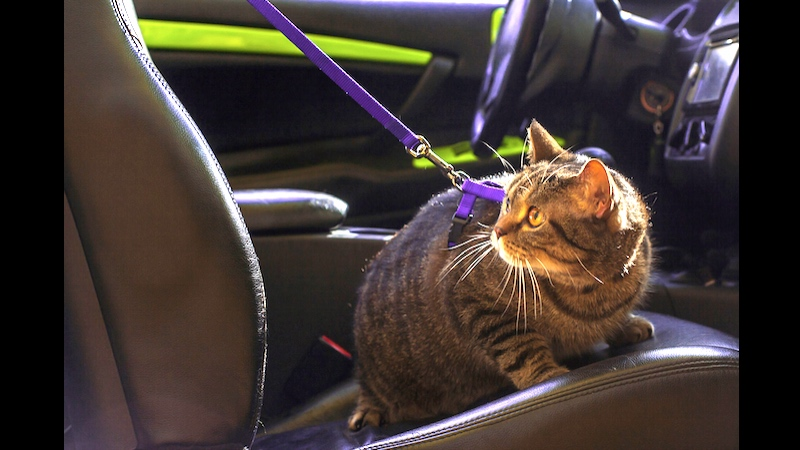 In honor of #NationalCatDay, Uber will deliver kittens to you right meow.
