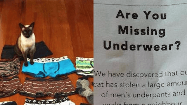 Woman's underwear-stealing cat leads to one of the most amusingly awkward personal ads ever.