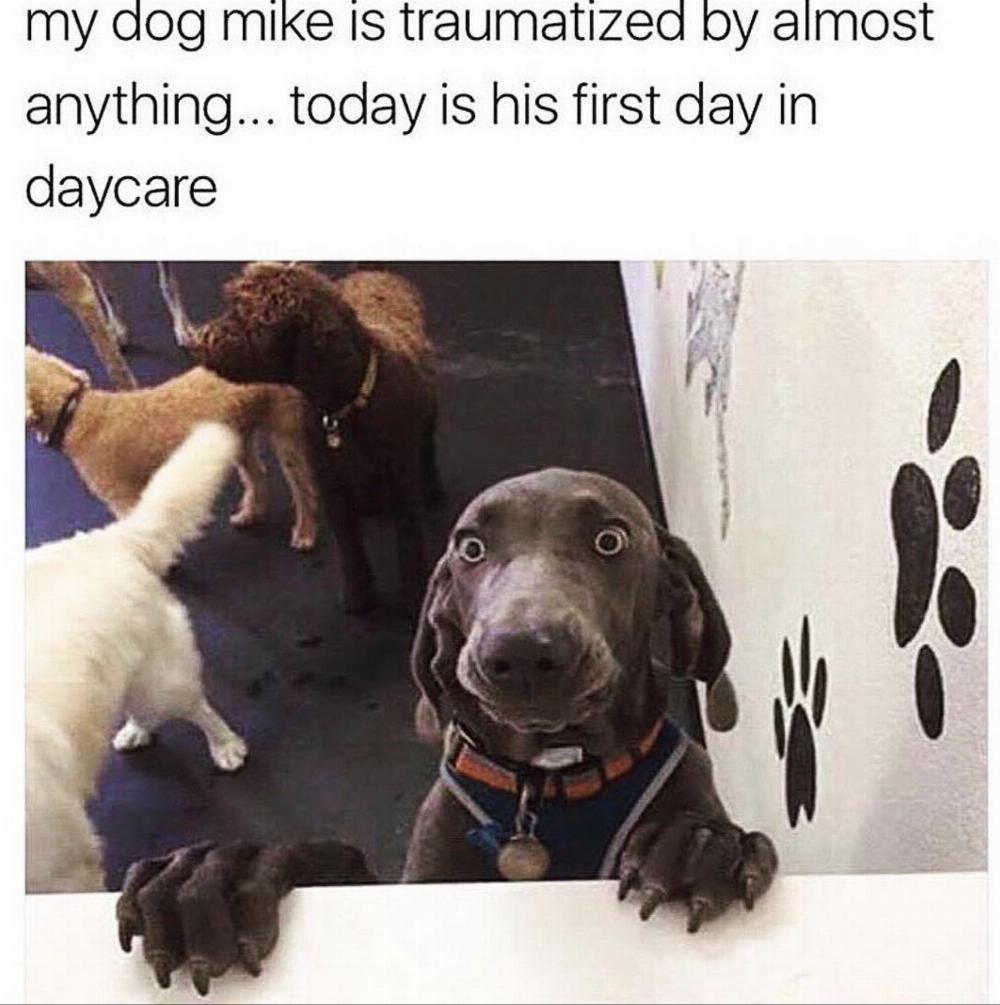 25 funny dog memes part 4 dogtime pin by jennifer reneau on
