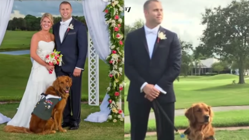 A Wounded Vets Service Dog Was His Best Man At His Wedding And Oh