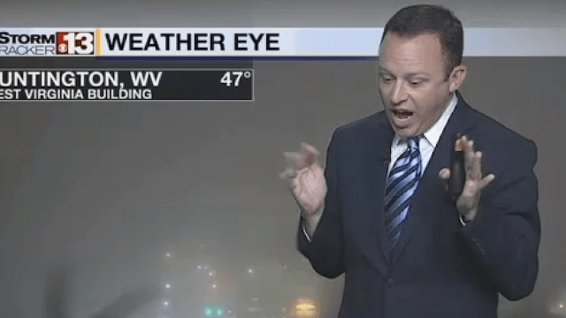 Weatherman sees 'gigantic' spider during live broadcast, and his scream does not disappoint.