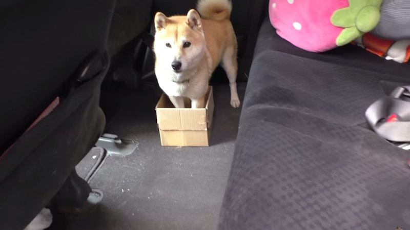 We'd feel bad for this dog getting pranked by his owner if it wasn't so funny.